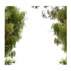 手绘清新绿树元素