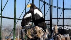鹰动物鸟类视频