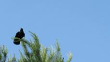 树枝上的小鸟视频