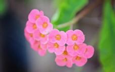 粉色观赏花