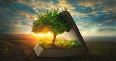 书 树创意设计