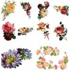 唯美手绘花朵插画