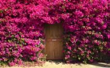 浪漫玫红花朵背景