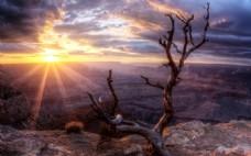 阳光干涸枯树背景