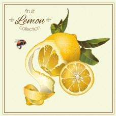 酸柠檬橙子柠檬蜂蜜矢量背景素材