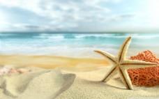 沙滩度假海星背景