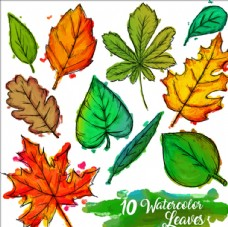 手绘水彩树叶集