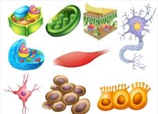 白底几种生物细胞插图
