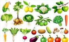 各种蔬菜插图集