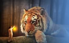 安静 温馨  人  灯  狮子