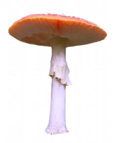 手绘大型蘑菇元素