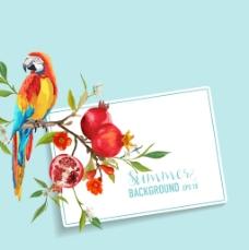 水彩绘石榴花和鹦鹉插画