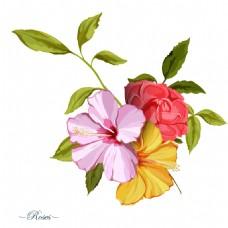 手绘美丽的山茶花插画