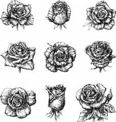 黑白素描玫瑰花插画