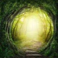 梦幻阳光绿色森林背景