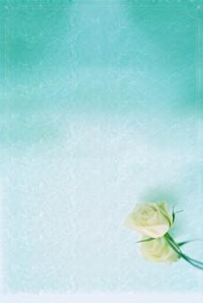 简约白色玫瑰背景