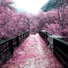 风景木桥围栏背景