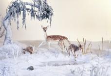 冬季大雪麋鹿觅食背景