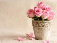 浪漫温馨粉色玫瑰背景