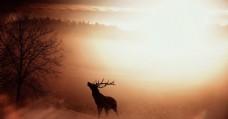 迷雾小鹿光芒