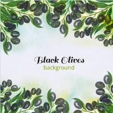 手绘水彩黑橄榄的背景