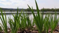 绿色植物视频素材