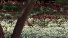 森林草丛花卉视频