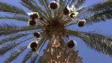 热带椰子树视频素材