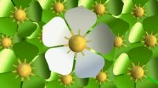 绿色花卉动画视频