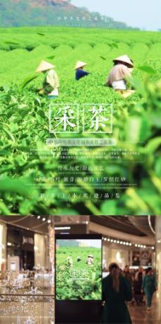 茶文化传统制茶工艺流程之采茶海报设计
