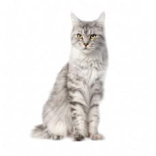 黑白猫咪png免扣元素