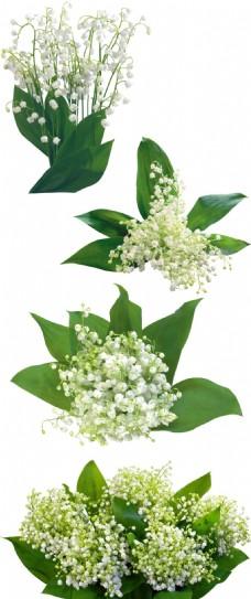 小清新绿叶花朵元素