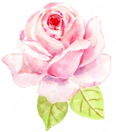 水彩玫瑰png免扣元素