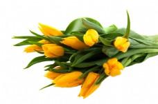 手绘黄色花朵元素
