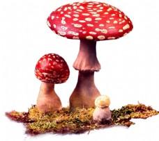 手绘油画红蘑菇元素