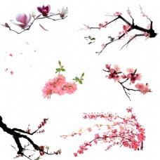 桃花免抠图素材