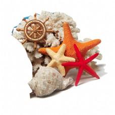 海星贝壳png免扣元素