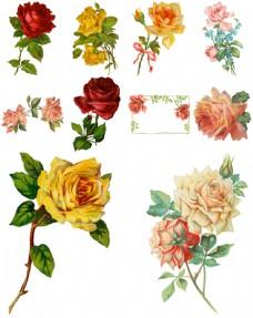 手绘复古玫瑰花