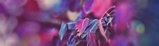 紫色梦幻banner背景