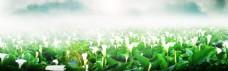 马蹄莲花池banner背景