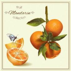 黄色橙子柠檬蜂蜜矢量背景素材