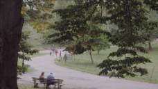 公园风景树木视频