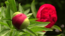 花卉视频素材设计