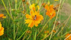 蜜蜂采蜜花卉素材
