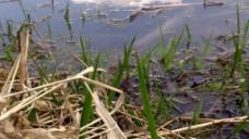 高清实拍池塘视频素材
