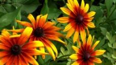 花卉盛开视频素材