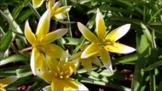 花卉花朵视频素材