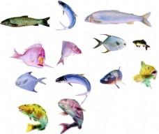 免抠多品种鱼类素材