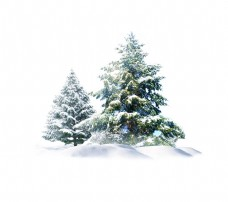 手绘冬季松树元素