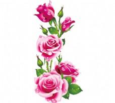 娇艳欲滴的玫瑰花png免扣元素